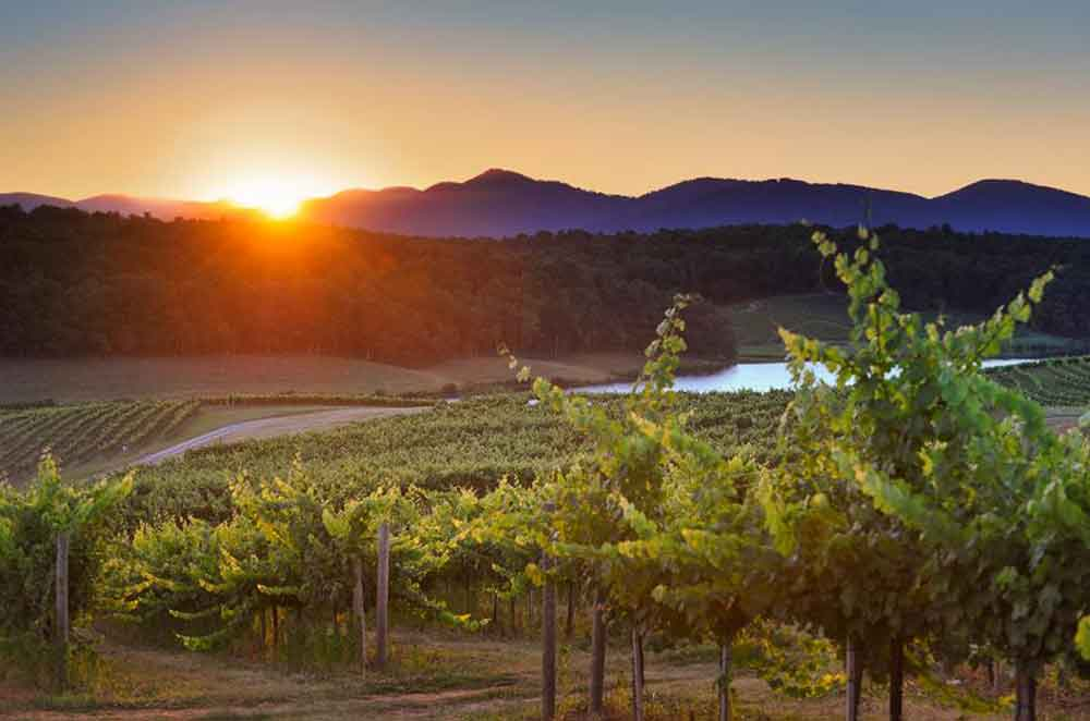 Four of the Best Wineries in the Blue Ridge Mountains