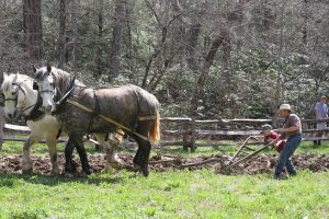 Old Time Plowing & Folkways @ Cradle of Forestry in America Heritage Site | Pisgah Forest | North Carolina | United States