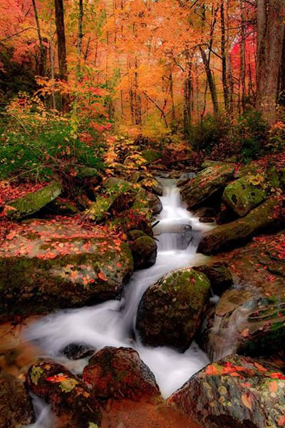 Beautiful fall scene with creek flowing.