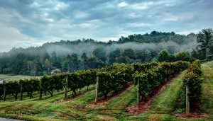 For the Love of Wine and Chocolate @ South Creek Vineyards & Winery | Nebo | North Carolina | United States