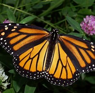 Butterfly Bonanza and Book Signing @ Cradle of Forestry Heritage Site | Pisgah Forest | North Carolina | United States