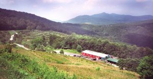 Live Music & More @ Historic Orchard at Altapass | Spruce Pine | North Carolina | United States